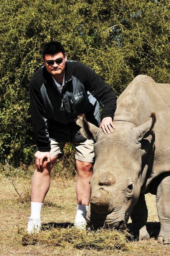 Yao i nosorożec